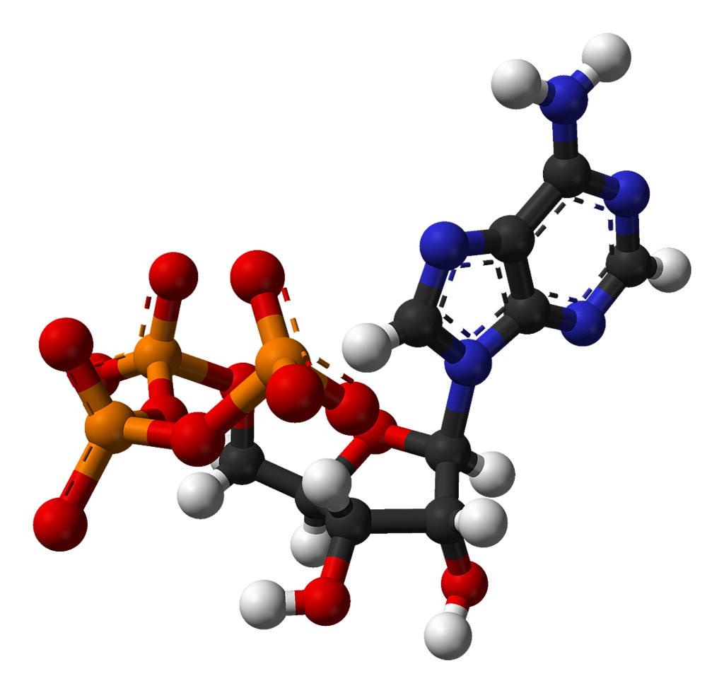 ATP fosfatos